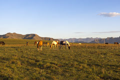 Horses against background mountains Royalty Free Stock Photo