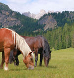 Horses in the alps Royalty Free Stock Photo