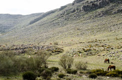 Horses in Andalusia. Solo adventure walking from El Chorro to Tarifa. Wellknown GR7 trail with amazing viewpoints gives ability to see Andalusia in it`s full Royalty Free Stock Images