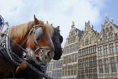 Horses in Antwerp Royalty Free Stock Photography