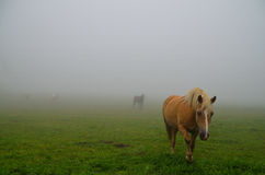 Horses appear in a fog Royalty Free Stock Photos
