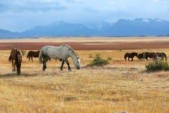 Horses in argentinian hacienda Royalty Free Stock Photos