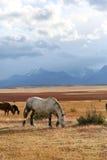 Horses in argentinian hacienda Stock Photo