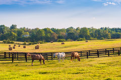 Free Horses At Horse Farm. Country Summer Landscape Royalty Free Stock Photography - 84445847