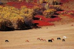 Horses in autumn prairie Stock Images