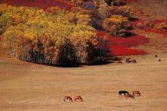 Horses in autumn prairie Royalty Free Stock Photos