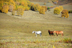 Horses in autumn prairie Royalty Free Stock Images