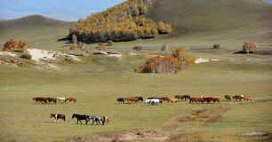 Horses in autumn prairie Stock Photo