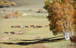 Horses in autumn prairie Royalty Free Stock Photography