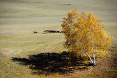 Horses in autumn prairie Royalty Free Stock Photos