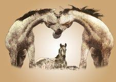 Horses baby Stock Image