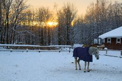 Horses on the background of a colorful sunset stock photos