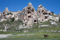 Horses on the background of rock rests. Cappadocia. Turkey Royalty Free Stock Images