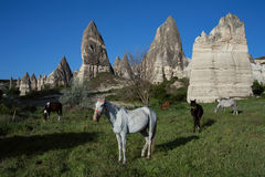 Horses on the background of rock rests. Royalty Free Stock Image