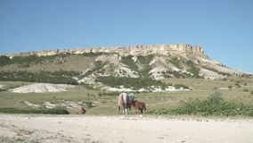 Horse and foal in the mountains. Horses on the background of sunny mountains, at white rock stock footage