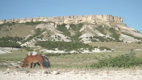 Horse and foal in the mountains. Horses on the background of sunny mountains, at white rock stock video footage