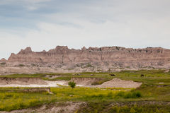 Horses in Badlands Landscape Royalty Free Stock Photography