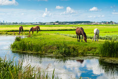 Horses on a bank Royalty Free Stock Photos