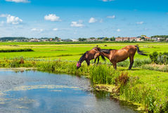 Horses on a bank Stock Image