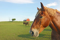 Horses and barn with copy space Stock Photography