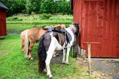 The horses by the barn Stock Photos