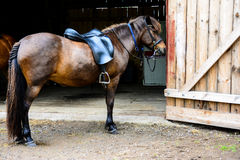 The horses by the barn Royalty Free Stock Images
