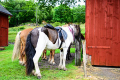 The horses by the barn Stock Photo