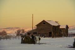 Horses and barn Stock Photos