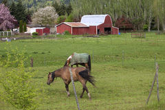 Horses and Barn, Woodland WA. Royalty Free Stock Images
