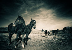 Horses at base of Colorado Rockies Royalty Free Stock Photography