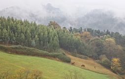 Horses at Basque Country. In a foggy day Royalty Free Stock Images