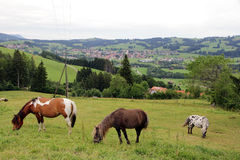 Horses in Bavaria. Three horses grazing in a mountain meadow in the Allgäu Royalty Free Stock Photography