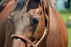 Horses 212 Stock Photo