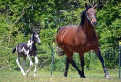 Horses 143 Royalty Free Stock Photos