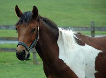 Horses 128 Stock Images