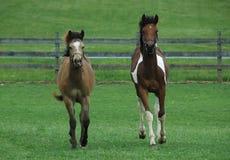 Horses 130 Stock Photo