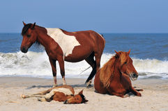 Horses on the beach Stock Photos
