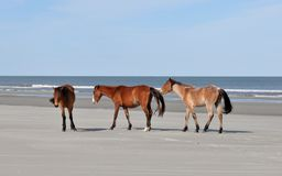Horses on the Beach Royalty Free Stock Photos