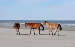 Horses on the Beach. Wild horses on the beach at Cumberland Island, Georgia royalty free stock photos