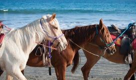 Horses on the beach. Three horses ready to ride on the beach Stock Photos