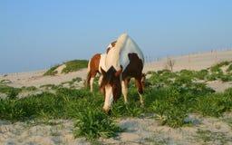 Horses On Beach stock photos