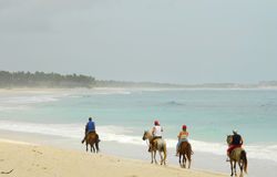 Horses on the beach Stock Image