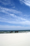 Horses on beach. Riding after beach horseback and in sea royalty free stock image