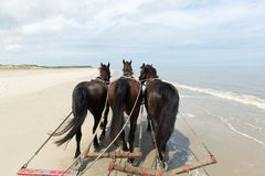 Horses at the beach Royalty Free Stock Photo
