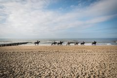 Horses on the beach. Stock Photography