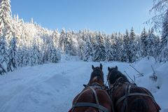 Horses beating the cold of the winter. royalty free stock photography
