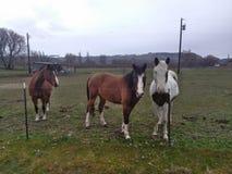 Horses. Beautiful babies farmlife love Royalty Free Stock Photography