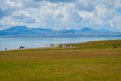 Horses by Song Kul lake, Kyrgyzstan. Horses and beautiful landscapes by Song Kul lake, Kyrgyzstan Stock Images
