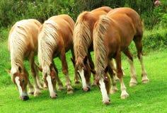 Horses in Beautiful Ohio Amish Country Stock Photos