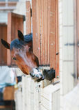 Horses behind bars Stock Photos